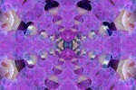 Eyewash Mandala