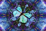 Butterfly Night Landing