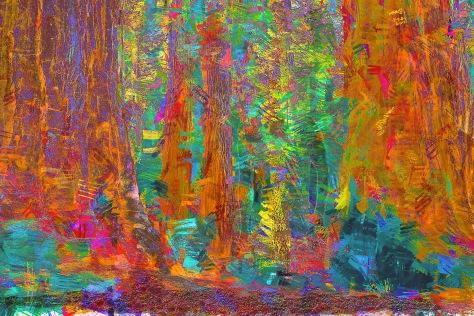 Forestal Scene
