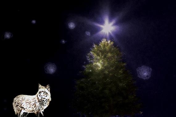 Fox's Starry Night