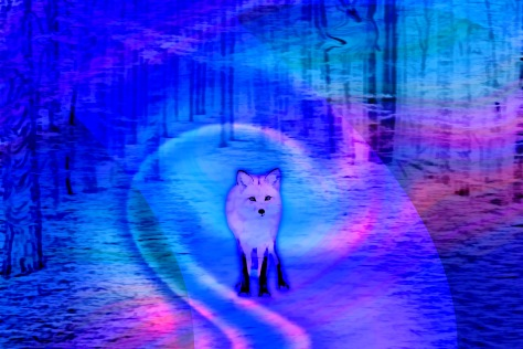 Silent Fox in Forest At Night