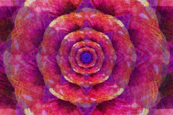 Rose Through Soft Light