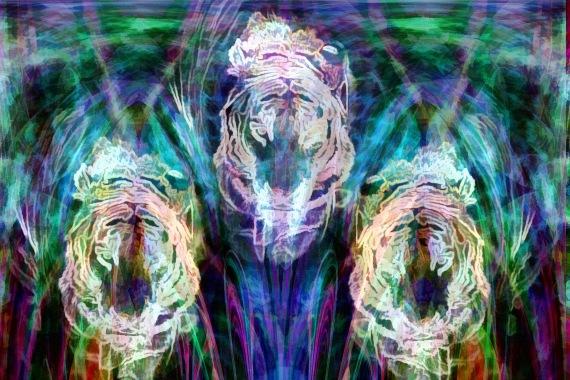 Three of Tigers